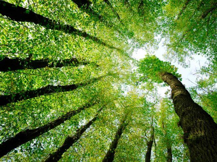 monitoraggio ambiente, natura